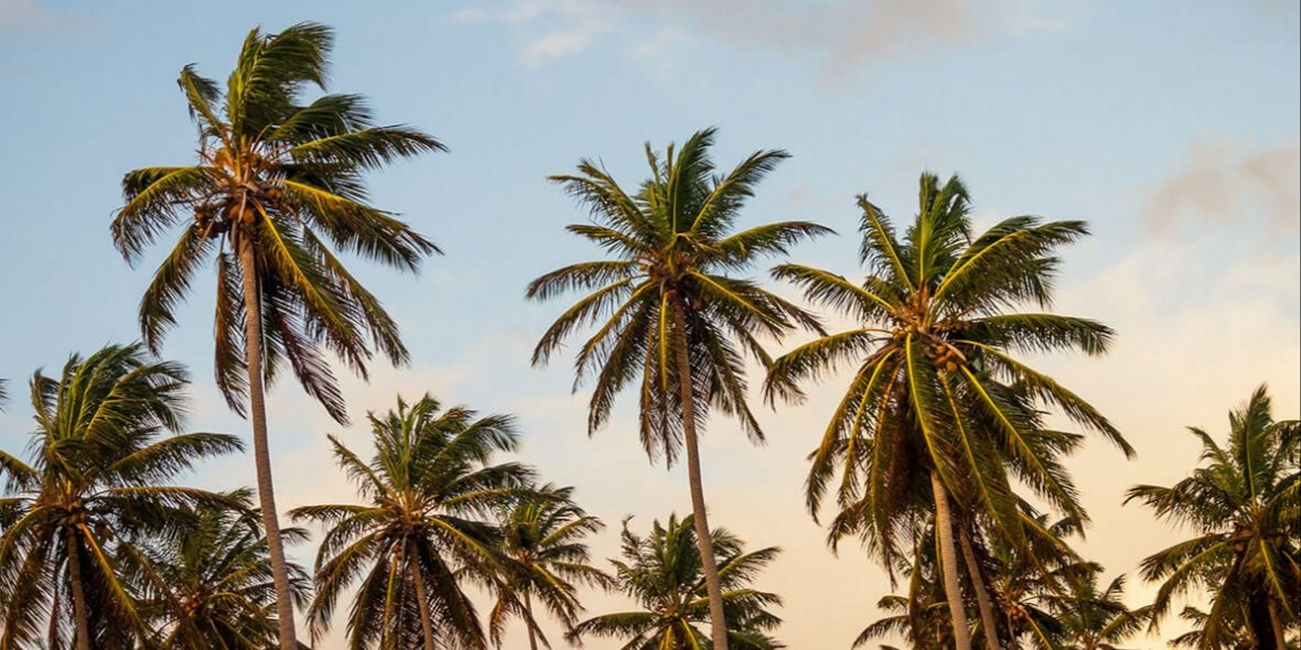 «Gambia offers space, beautiful beaches, tropical atmosphere, low living costs and affordable real estate». An interview with «GamRealty»